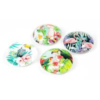 Glasmagneter 4-pack med djungelfåglar.